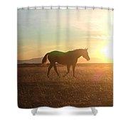 Sunset Mare Shower Curtain