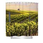 Sunset On A Vineyard Shower Curtain