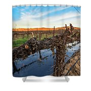 Sunset On The Vine Shower Curtain