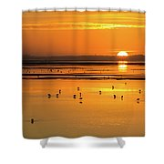 Sunset Over Arcata Marsh, With Avocets Shower Curtain
