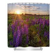 Sunset Over Meadow Of Lupine Shower Curtain
