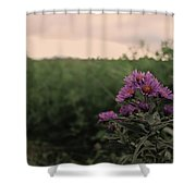Sunset Purple  Shower Curtain