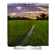 Sunset Rice Fields In Cambodia Shower Curtain