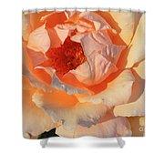Sunset Rose Shower Curtain