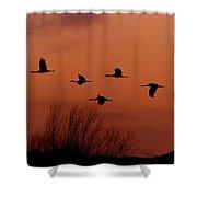 Sunset Sandhill Cranes  Shower Curtain