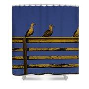 Sunset Seagulls Shower Curtain