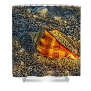 Sunset Seashell Shower Curtain