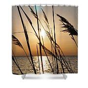 Sunset Through The Dune Grass Shower Curtain
