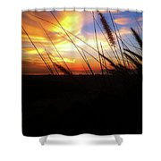 Sunset Through The Sea Grass Shower Curtain