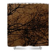 Sunset Winter Shower Curtain