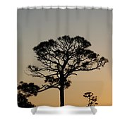 Sunsetting Trees Shower Curtain