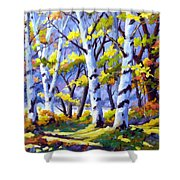 Sunshine And Birches Shower Curtain