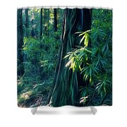 Sunshine In The Forest Shower Curtain