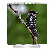 Sunshine Needed - Male Downy Woodpecker Shower Curtain