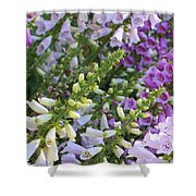 Sunshine On Foxgloves Shower Curtain