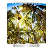 Sunshine Palms Shower Curtain