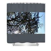 Sunshine Passes Pine  Shower Curtain