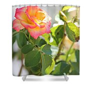 Sunshine Rose Shower Curtain