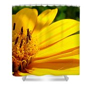 Sunshine Sally Shower Curtain