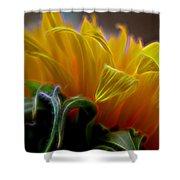 Sunshine Sunflower Petals Two Shower Curtain
