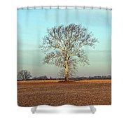 Sunshine Sycamore Shower Curtain