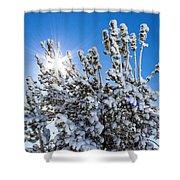 Sunshine Through Snow Covered Tree Shower Curtain