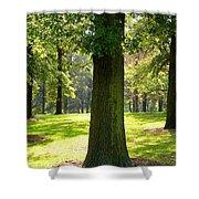 Sunshine Trees Forest Park Shower Curtain