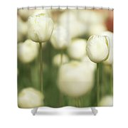 Sunsoaked Tulips #3 Shower Curtain