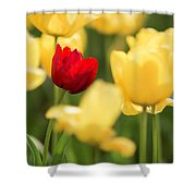 Sunsoaked Tulips #5 Shower Curtain