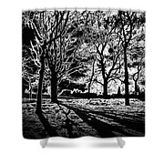 Super Contrasted Trees Shower Curtain