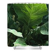 Super-fly Cabbage Shower Curtain