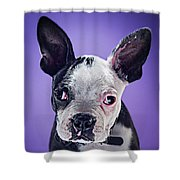 Super Pets Series 1 - Bugsy Close Up Shower Curtain
