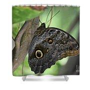 Superb Markings On An Owl Butterfly In A Garden Shower Curtain