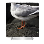 Suprised Australian Seagull Shower Curtain