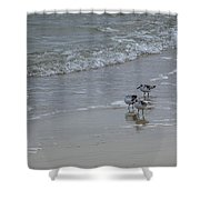 Surf And Birds Shower Curtain
