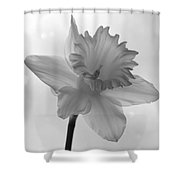 Surfacing Image Of A Daffodil Shower Curtain