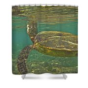 Surfacing Seaturtle Shower Curtain