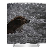Surfer Dog 1 Shower Curtain