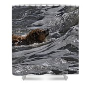 Surfer Dog 2 Shower Curtain