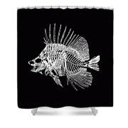 Surgeonfish Skeleton In Silver On Black  Shower Curtain