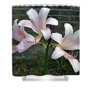 Surprise Lilies Shower Curtain