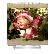 Surprise Rose Shower Curtain
