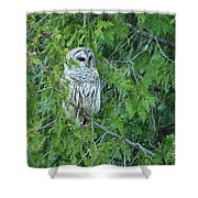 Surprise Visitor II Shower Curtain