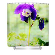 Surreal Columbine Shower Curtain