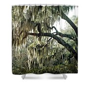 Surreal Gothic Savannah Georgia Trees With Hanging Spanish Moss Shower Curtain