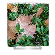 Surrounded Leaf Shower Curtain