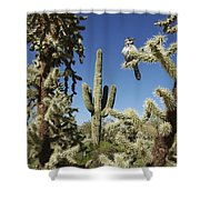 Surrounded Saguaro Cactus Wren Shower Curtain
