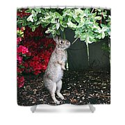 Surveying Next Leafy Meal Shower Curtain