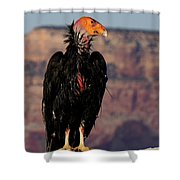 Surveying The Canyon Shower Curtain