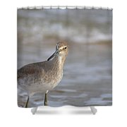 Suspicious Willet Shower Curtain